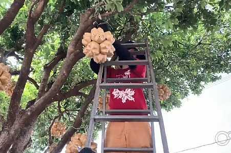 Tradicional decoração de Santa Fé do Sul começa a ser instalada